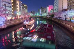 170410夜桜42