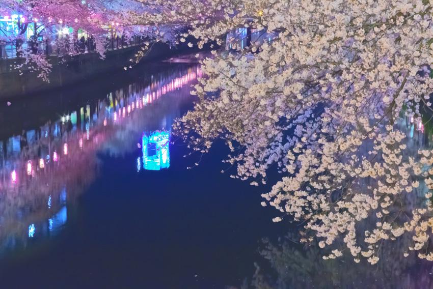 cherry_blossoms_night[Oooka_River]_17.jpg