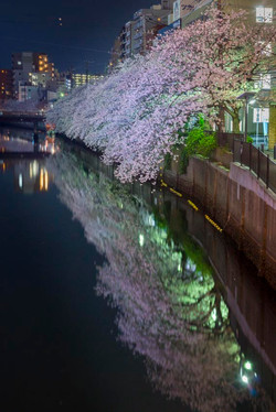 170410夜桜145