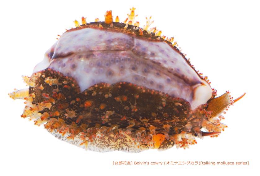 オミナエシダカラ03 P