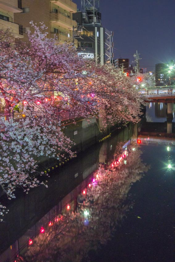 170410夜桜82