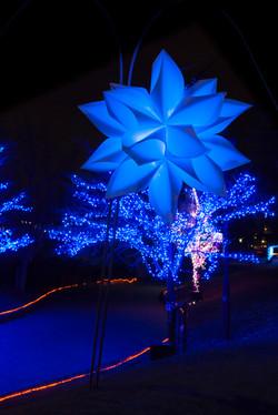 illumination[Hodogaya_Park]_33_1.jpg