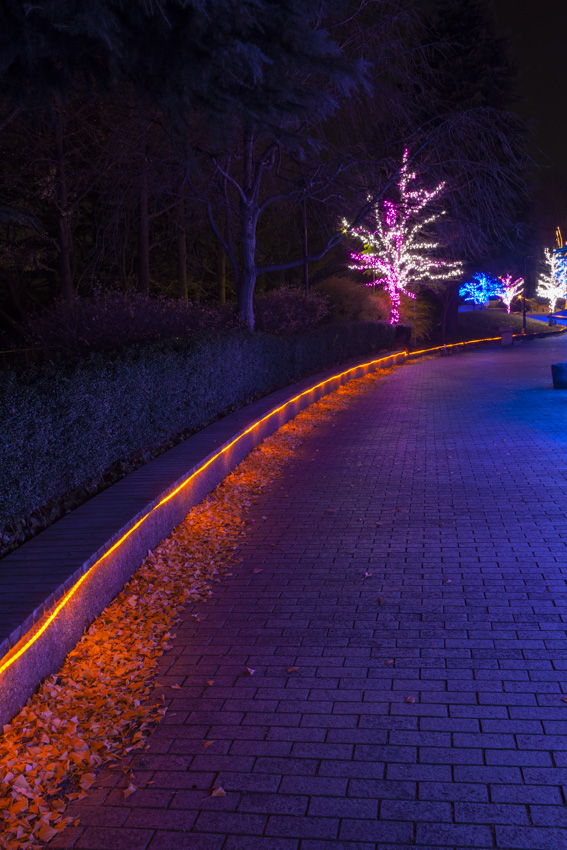 illumination[Hodogaya_Park]_40_3.jpg