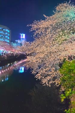 cherry_blossoms_night[Oooka_River]_57.jpg