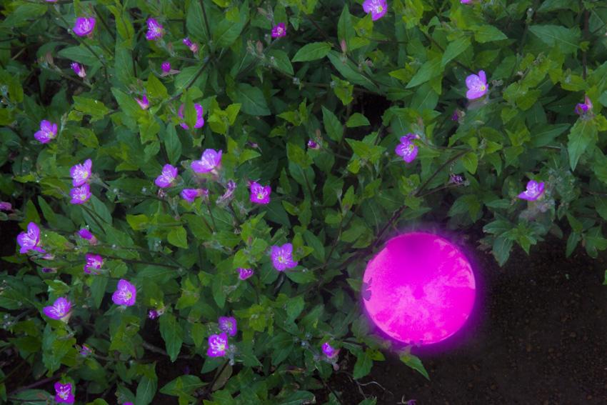 born_on_the_globe_127.jpg