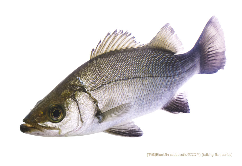 sea-bass_002_P.jpg