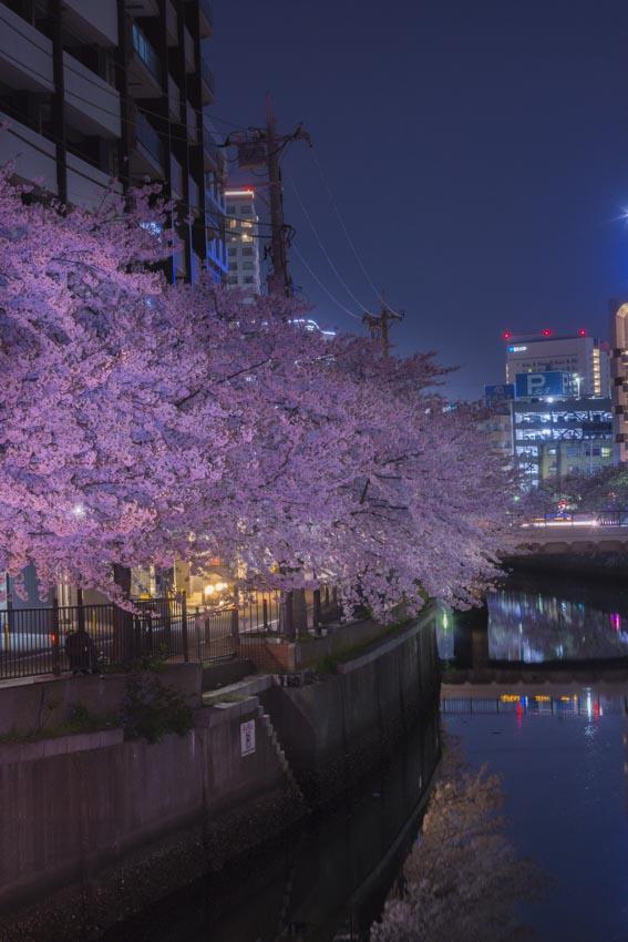 170410夜桜108