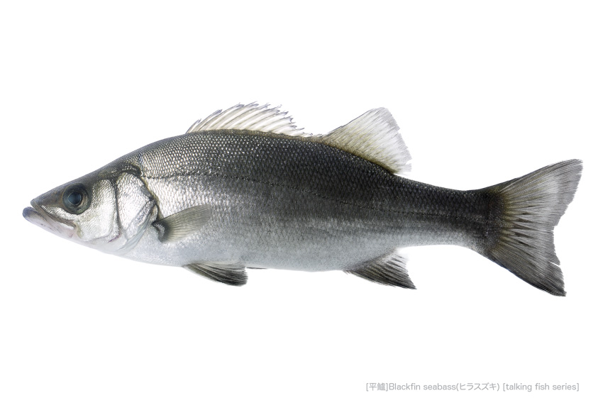 sea-bass49_P.jpg