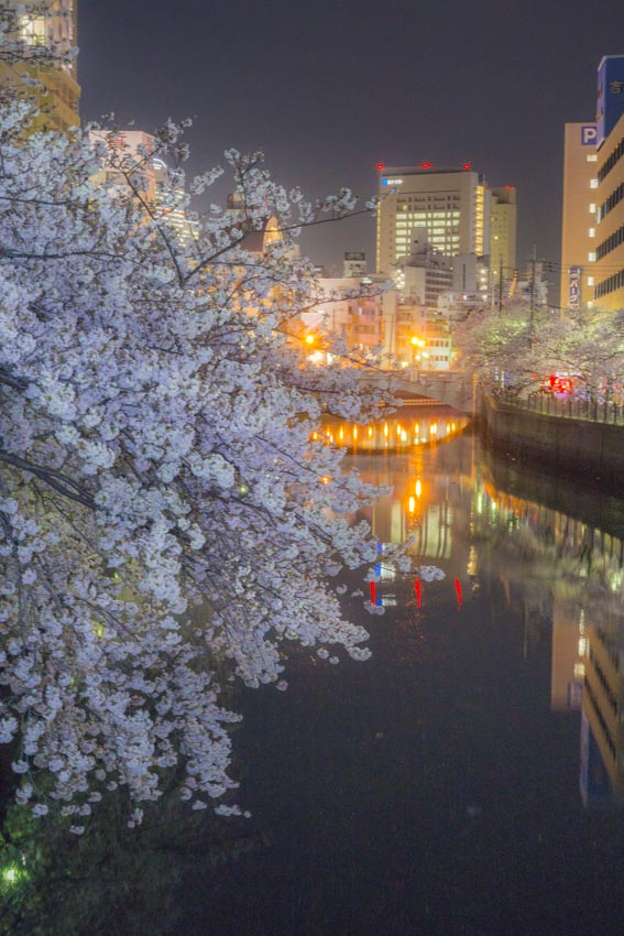 170410夜桜158