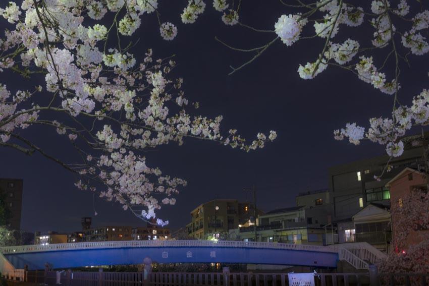 170410夜桜23
