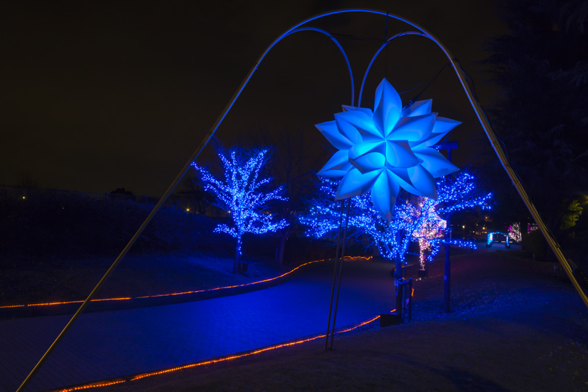 illumination[Hodogaya_Park]_34_1.jpg
