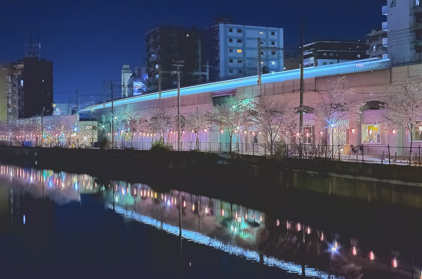 cherry_blossoms_night[Oooka_River]_12.jpg
