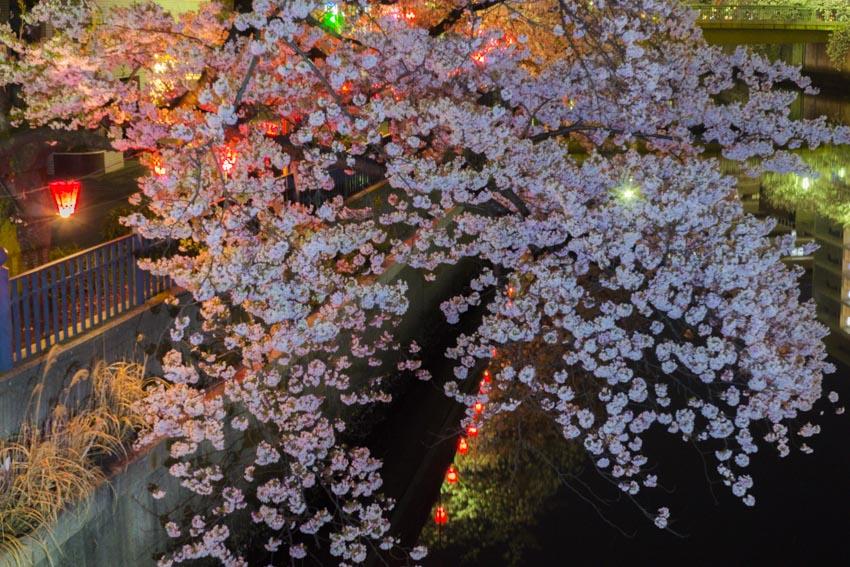 170410夜桜29