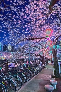 cherry_blossoms_night[Oooka_River]_48.jpg