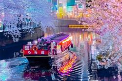 cherry_blossoms_night[Oooka_River]_05.jpg
