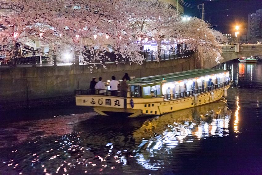 130326cherry_blossom_night_058.jpg