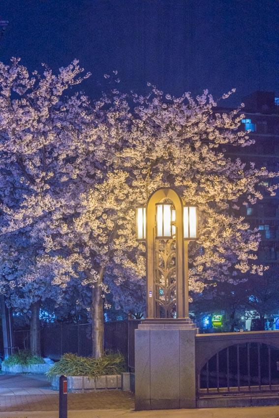 170410夜桜105