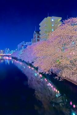 cherry_blossoms_night[Oooka_River]_61.jpg