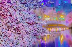 cherry_blossoms_night[Oooka_River]_38.jpg