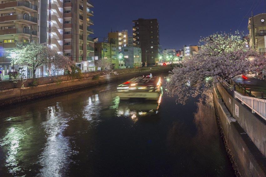 170410夜桜36