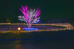 illumination[Hodogaya_Park]_18.jpg