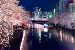 130326cherry_blossom_night_064.jpg