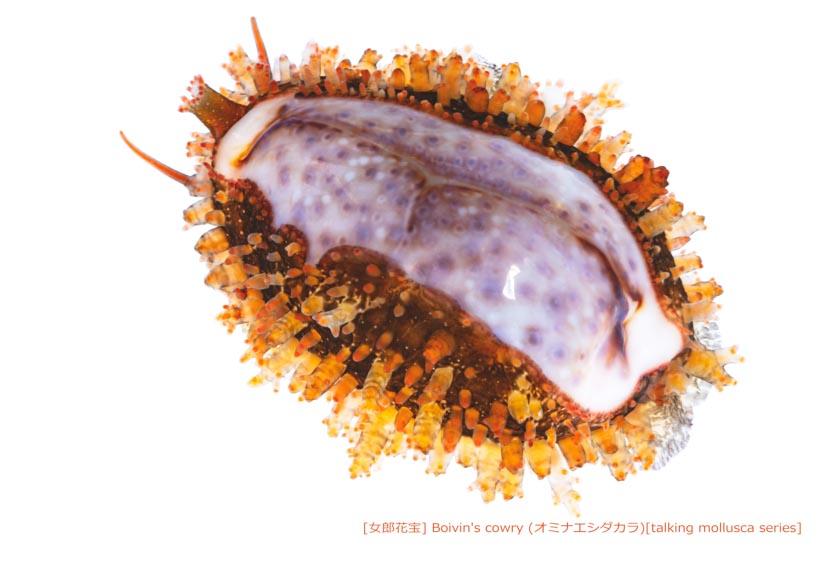 オミナエシダカラ09 P