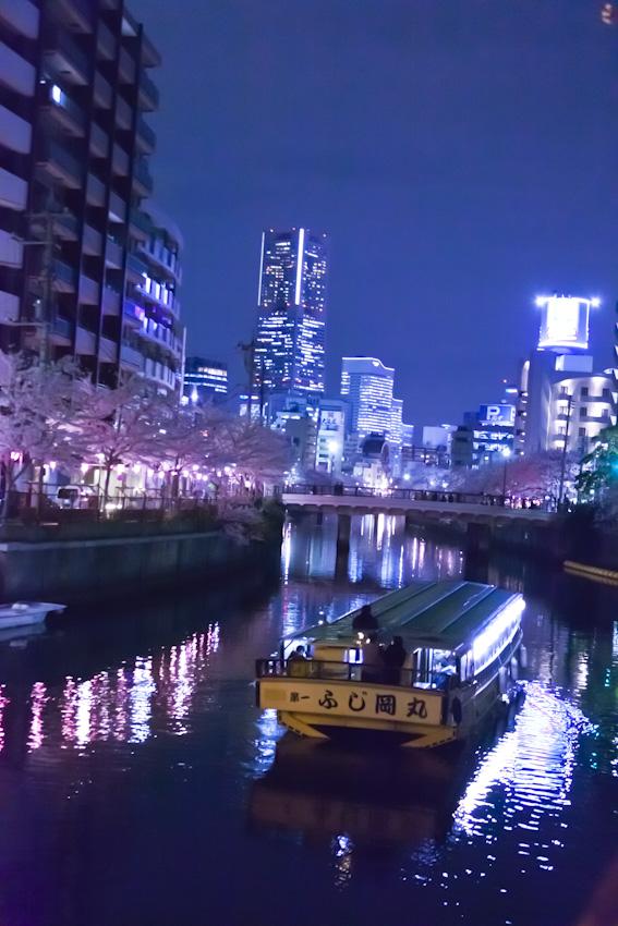 130326cherry_blossom_night_113.jpg
