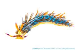 ムカデミノウミウシa25 P