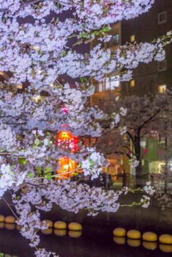 170410夜桜100