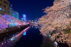cherry_blossoms_night[Oooka_River]_15.jpg