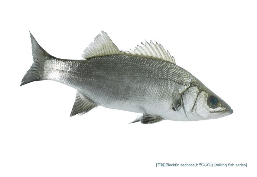 sea-bass_125_P.jpg