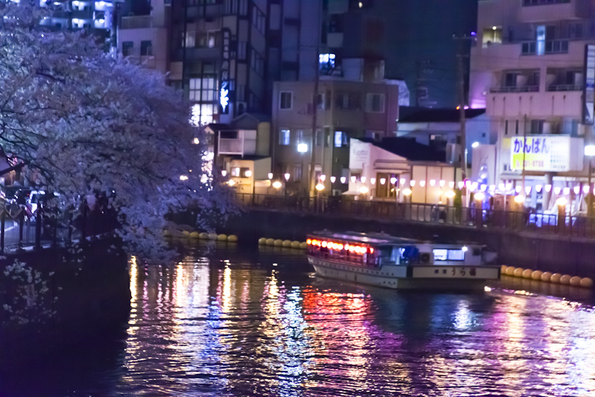 130326cherry_blossom_night_132.jpg