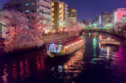 170410夜桜44