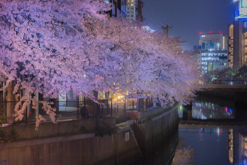170410夜桜110