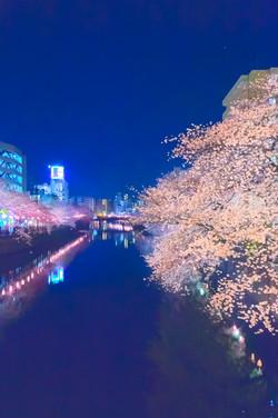 cherry_blossoms_night[Oooka_River]_56.jpg