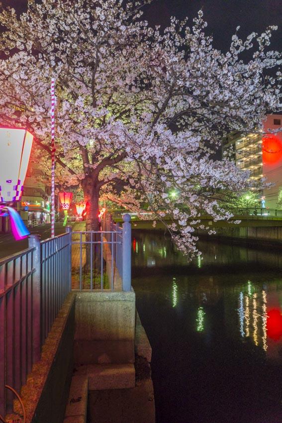 170410夜桜71