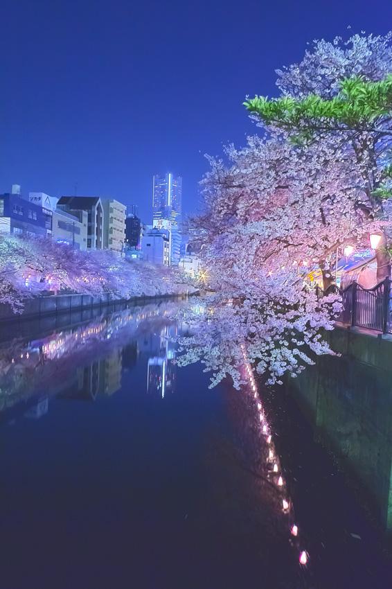 cherry_blossoms_night[Oooka_River]_54-1.jpg