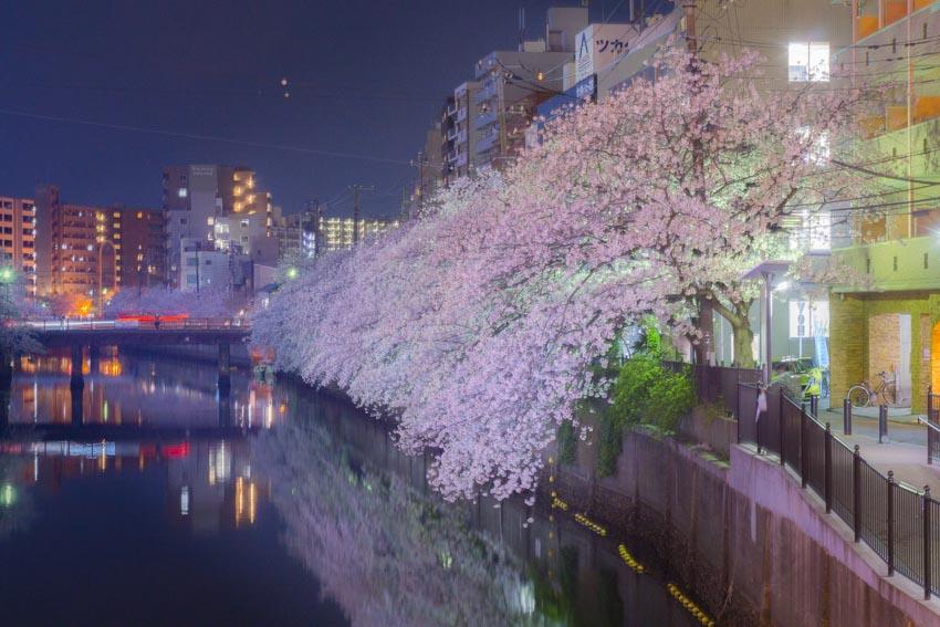 170410夜桜140