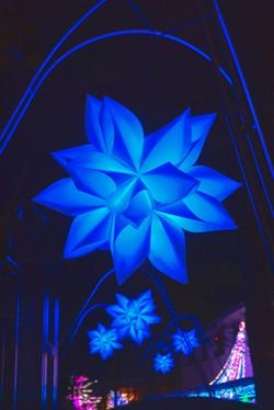 illumination[Hodogaya_Park]_36.jpg