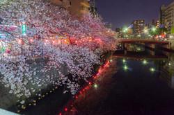 170410夜桜08