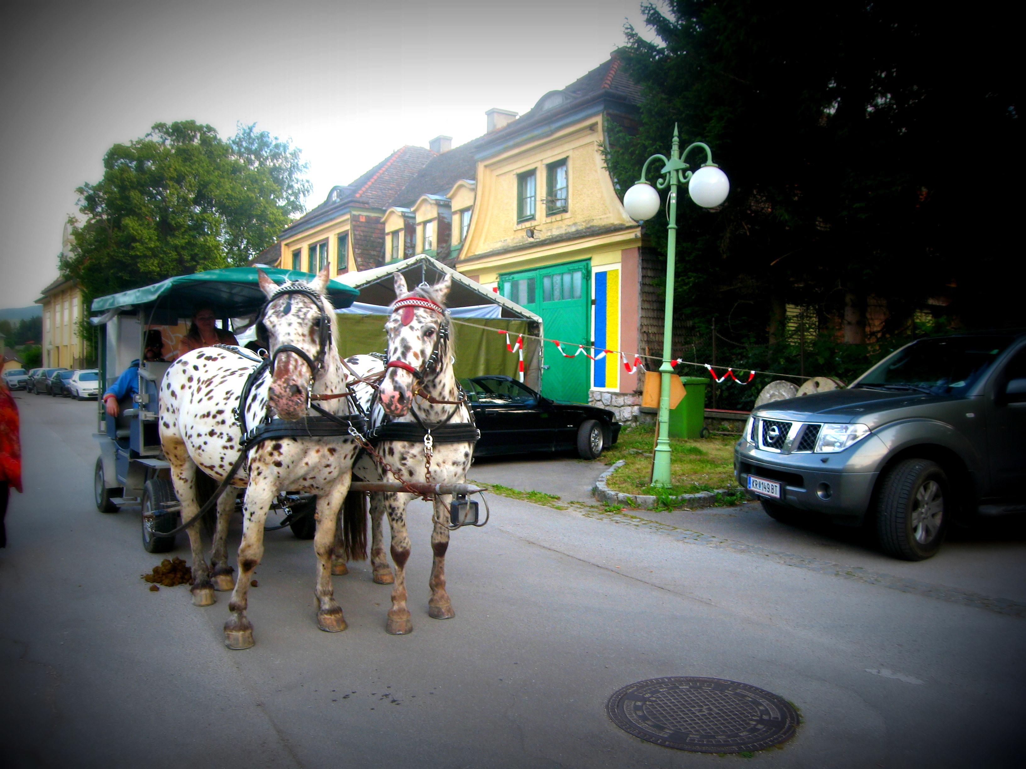 Hirschwang  Gallery
