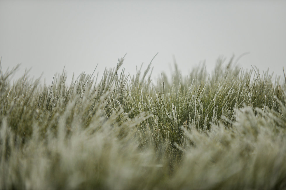 closeup-grass-covered-snowflakes-cloudy-sky-with-blurry-background.jpg