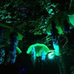 Wisteria Umbrellas - Larmer Tree '19