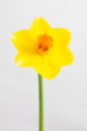 Daisy-14.jpg