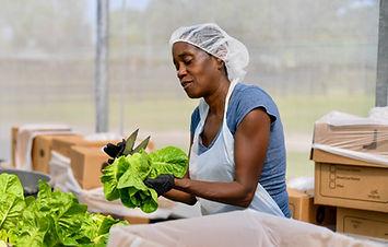 Organic Farms in South Florida