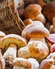 Autumn Cep Mushrooms. Basket with porcin