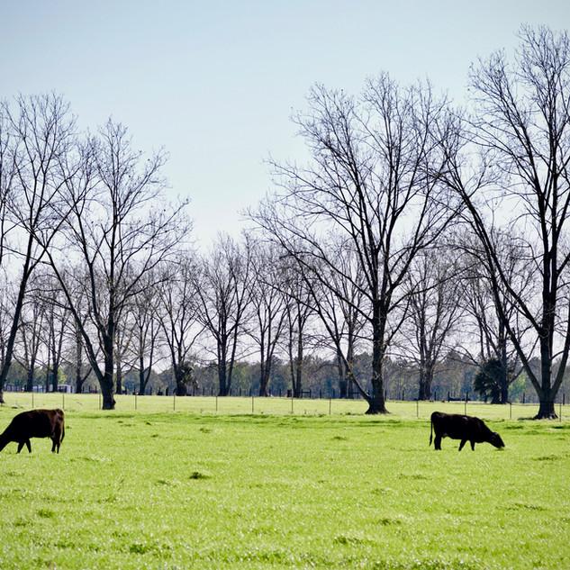 More Barn - 26.jpg