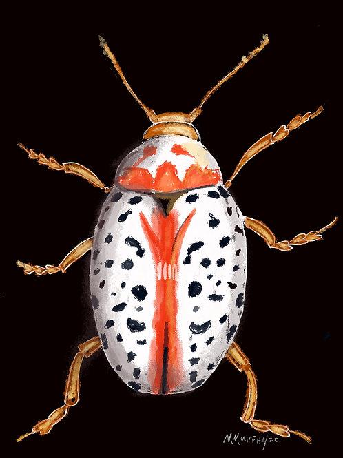 Buffalo Carpenter Beetle