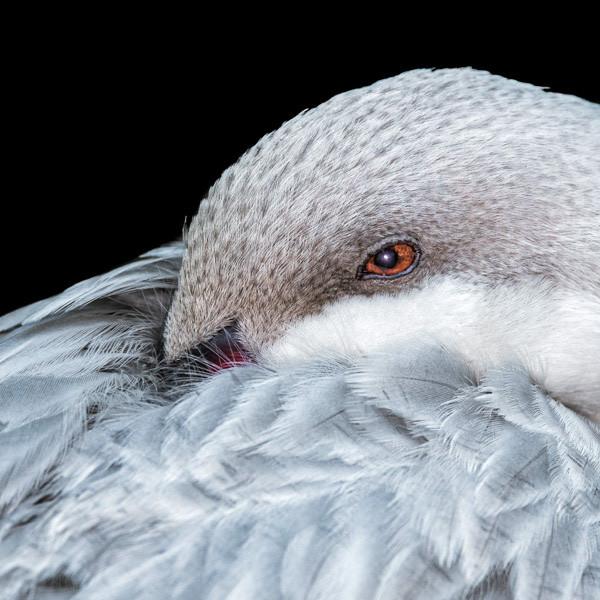 bird thumbs-16.jpg